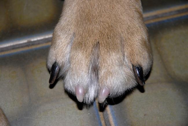 Ostéopathie canine - Page 3 _dsc0110