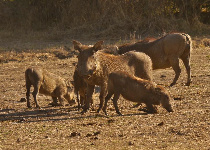 Lower Zambezi Miscellany P1010014