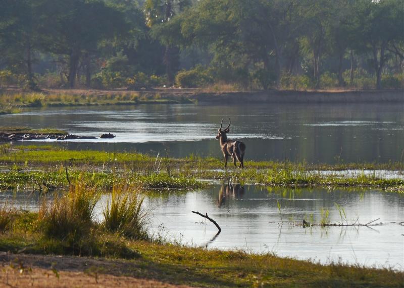 Lower Zambezi Miscellany P1010213