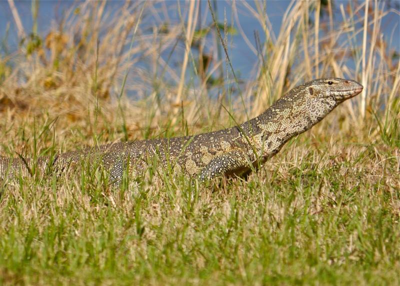 Lower Zambezi Miscellany P1010312