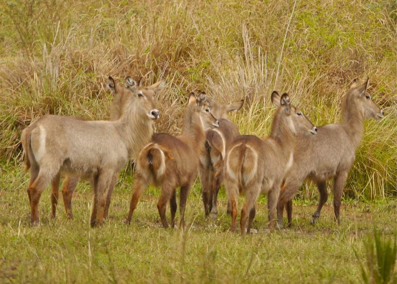 Lower Zambezi Miscellany P1010611
