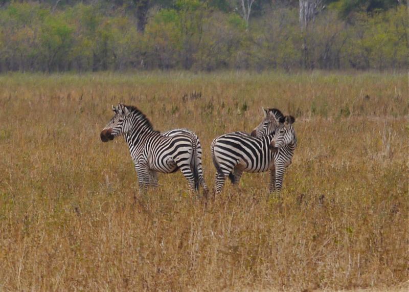 Lower Zambezi Miscellany P1010612