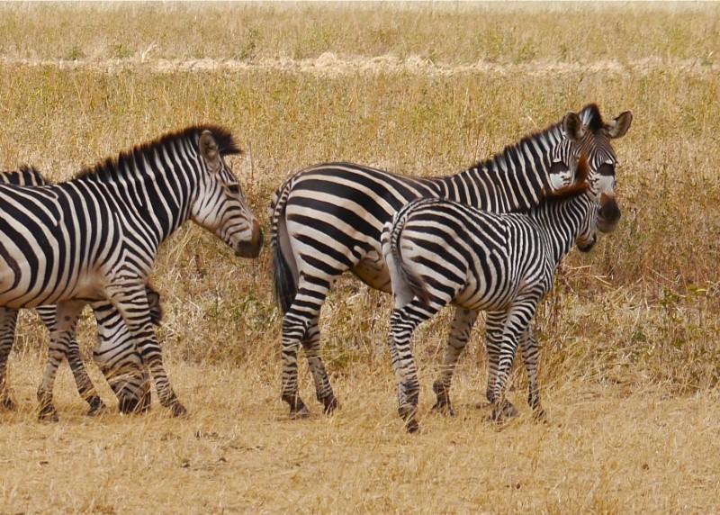 Lower Zambezi Miscellany P1010613
