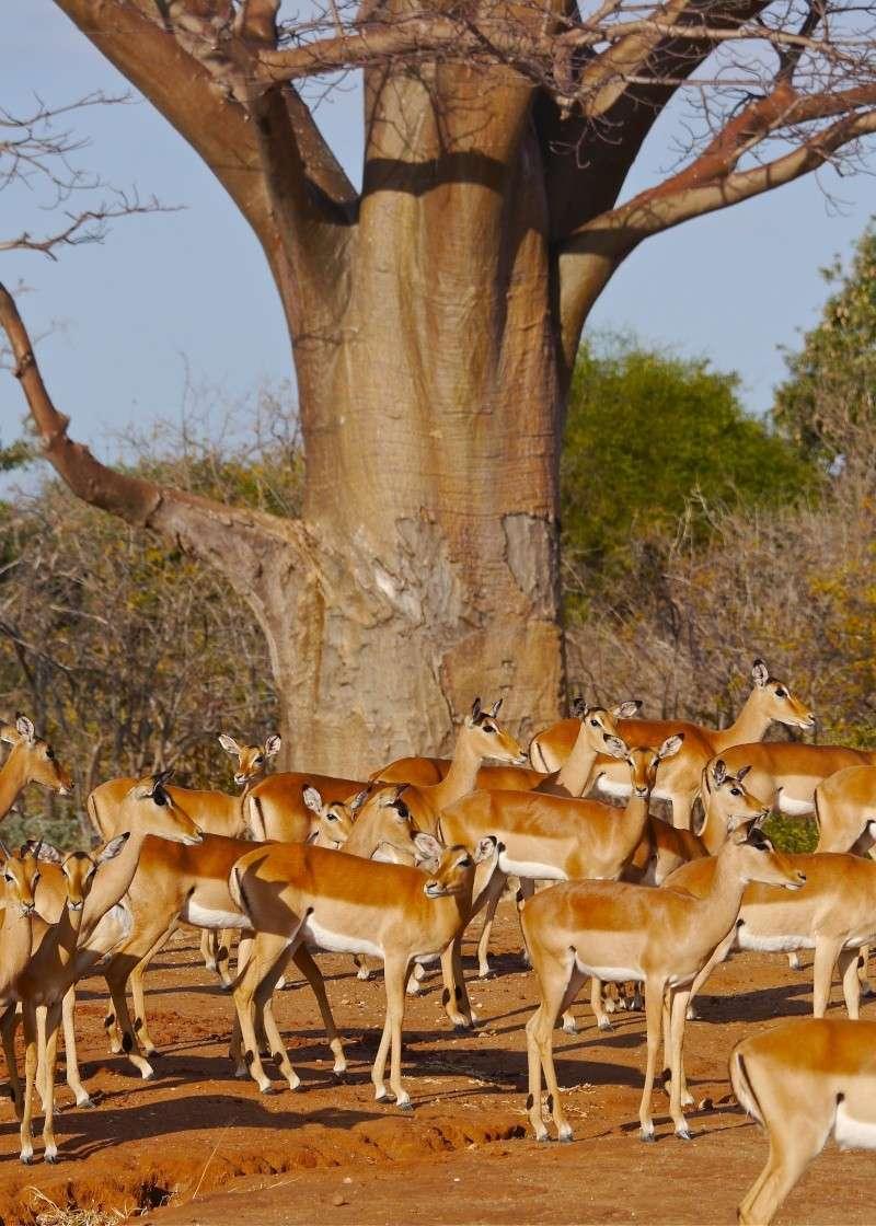 Lower Zambezi Miscellany P1010713