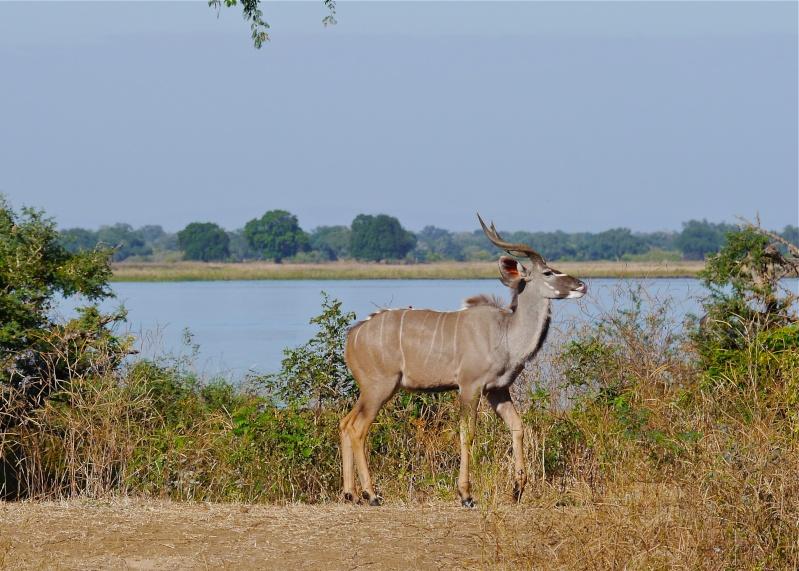 Lower Zambezi Miscellany P1010814