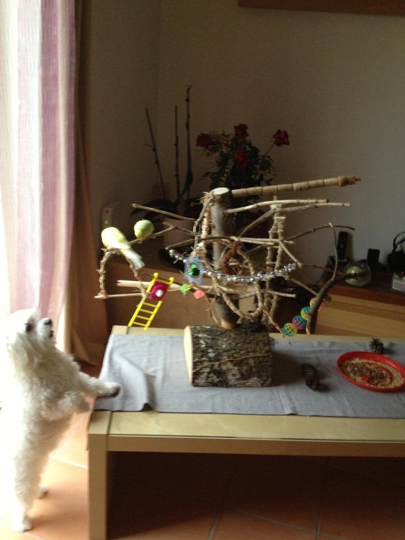 Un arbre à Perruches !!! - Page 6 Img_0812