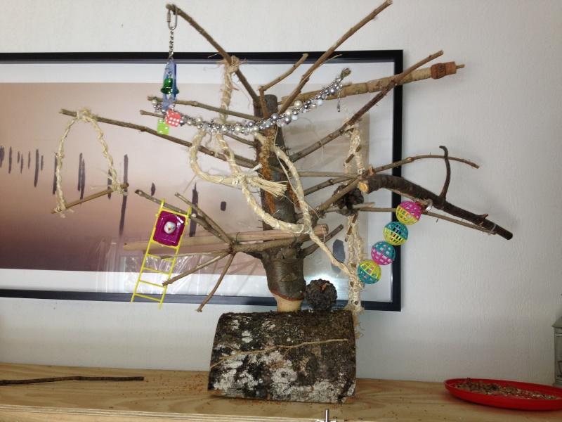 Un arbre à Perruches !!! - Page 6 Img_0813