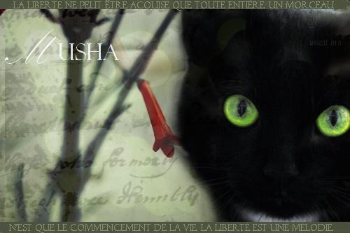 Musha [Signa] Signa_16