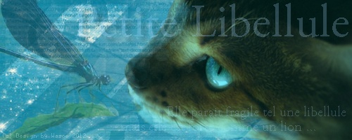 Petite Libellule [Kit] Signa_20