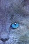 Lune Bleue [Kit] Vava_l10