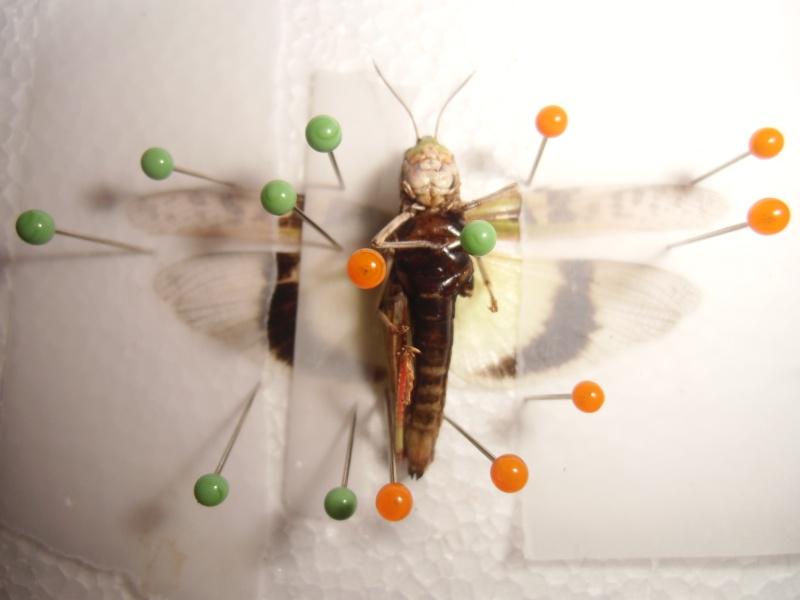 créer un forum : entomofolia - Portail Cimg1144