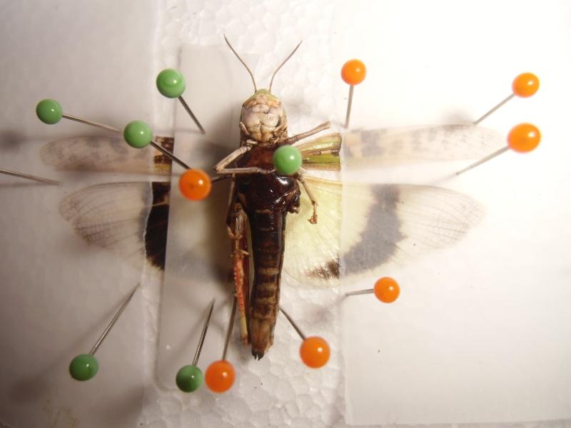 créer un forum : entomofolia - Portail Cimg1145