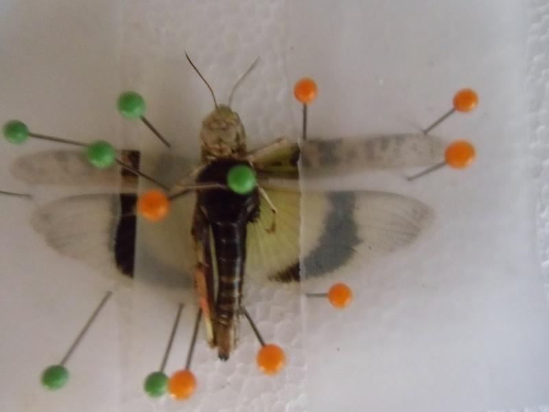 créer un forum : entomofolia - Portail Cimg1146