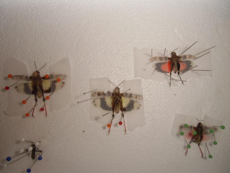 créer un forum : entomofolia - Portail Cimg1149