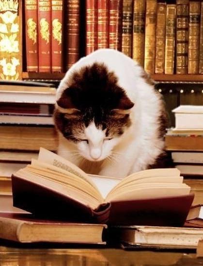 lectrices et lecteurs-II - Page 2 Chat12