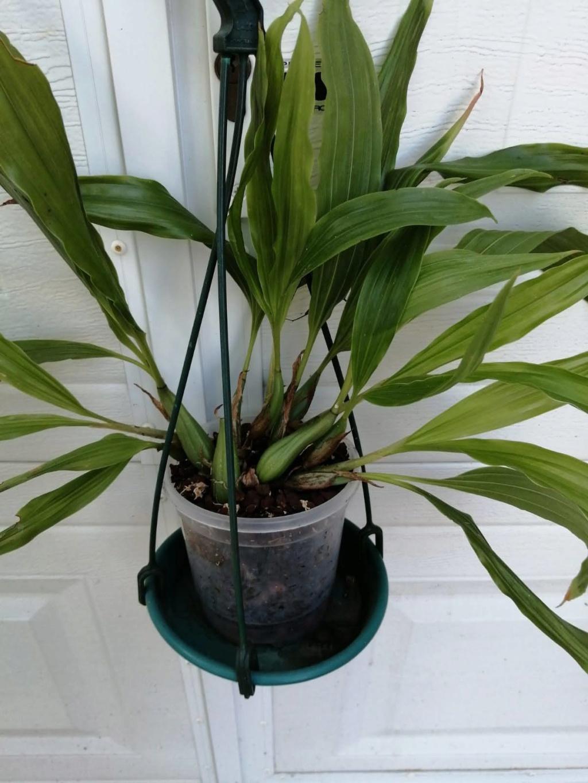 vente d'orchidée de Picasso Img-2029