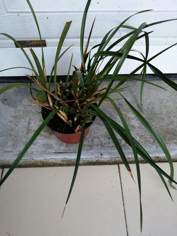 vente d'orchidée de Picasso Img-2032