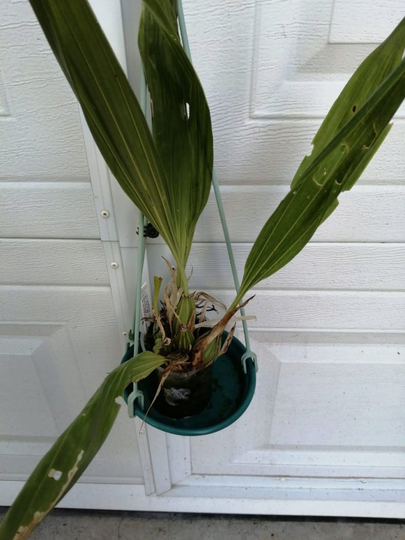 vente d'orchidée de Picasso Img-2033
