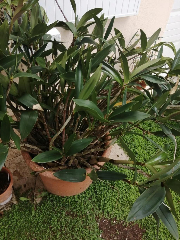 vente d'orchidée de Picasso Img-2034
