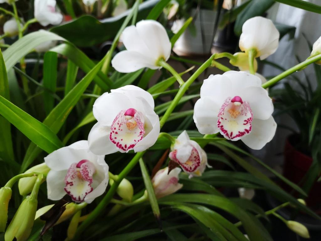Floraison en pele mêle Img_1133