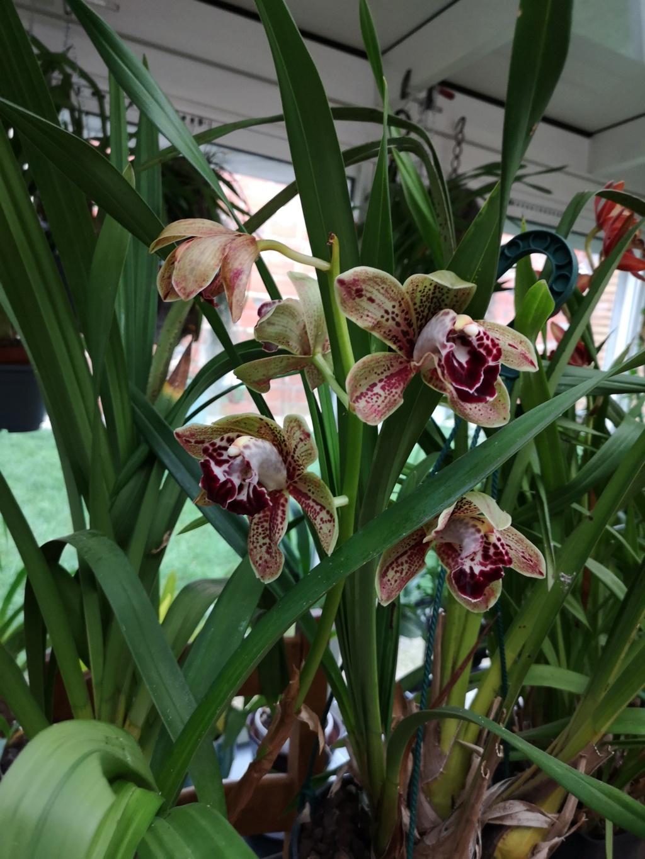 Floraison en pele mêle Img_1140