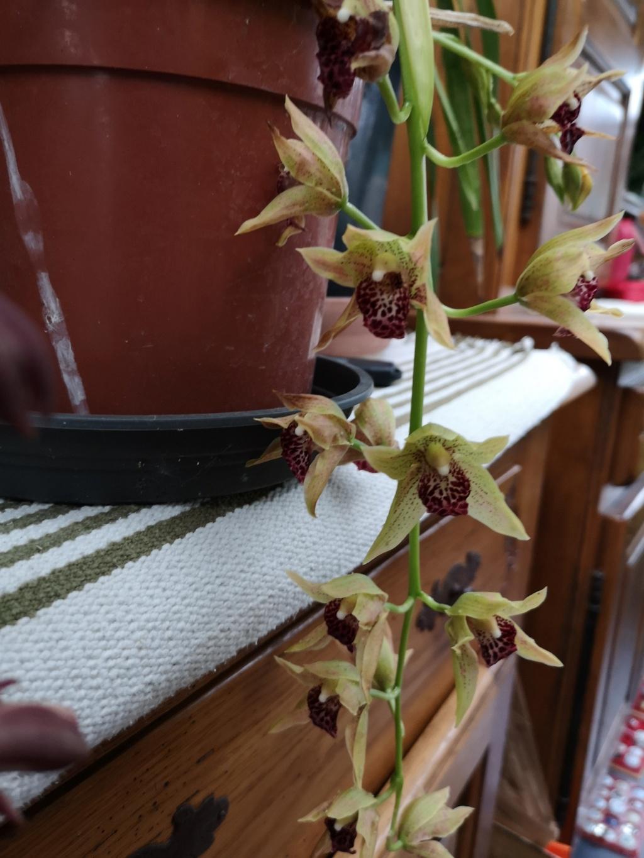 Floraison en pele mêle Img_1141