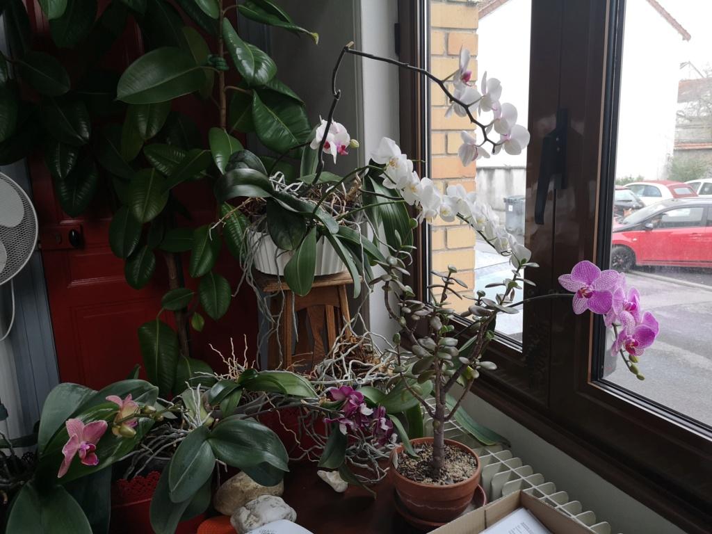 phalaenopsis au bureau - Page 2 Img_1148