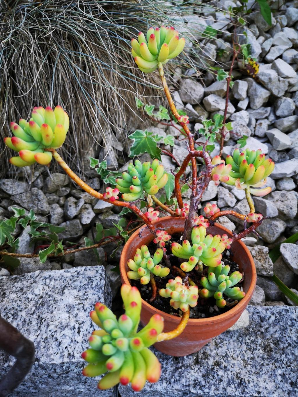 sortie des succulentes pour la belle saison - Page 2 Img_2083