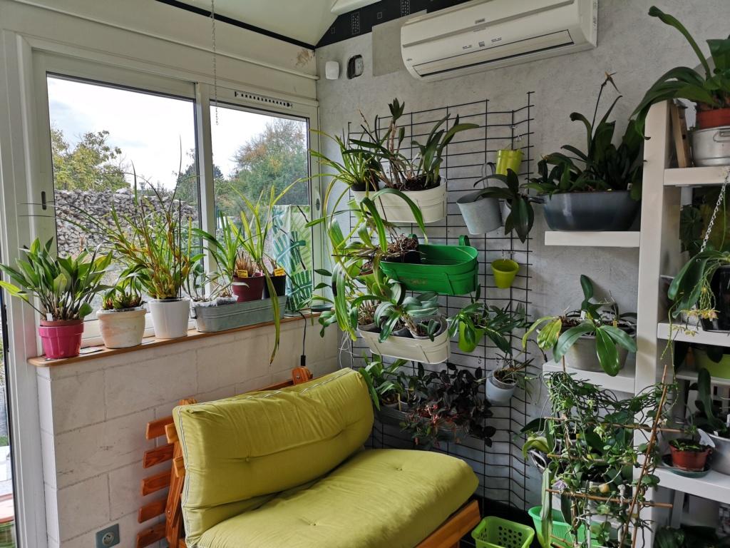 ma véranda, mon petit paradis végétal ... - Page 3 Img_2116