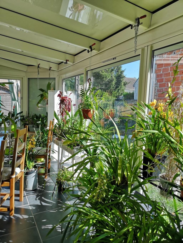 ma véranda, mon petit paradis végétal ... - Page 3 Img_2156