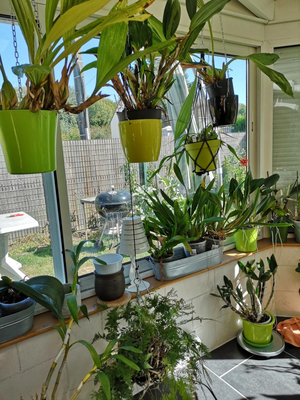 ma véranda, mon petit paradis végétal ... - Page 3 Img_2158