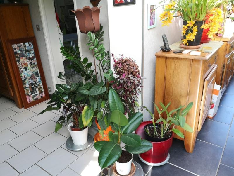 ma véranda, mon petit paradis végétal ... - Page 4 Img_2256