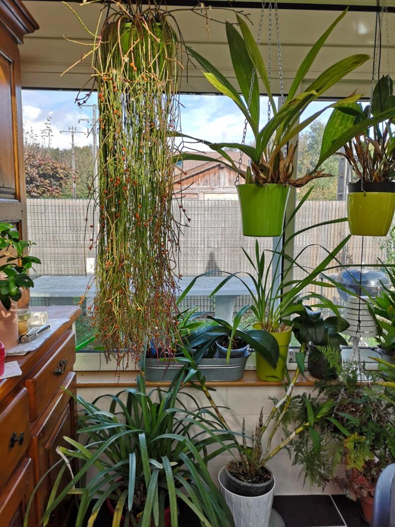 ma véranda, mon petit paradis végétal ... - Page 4 Img_2258