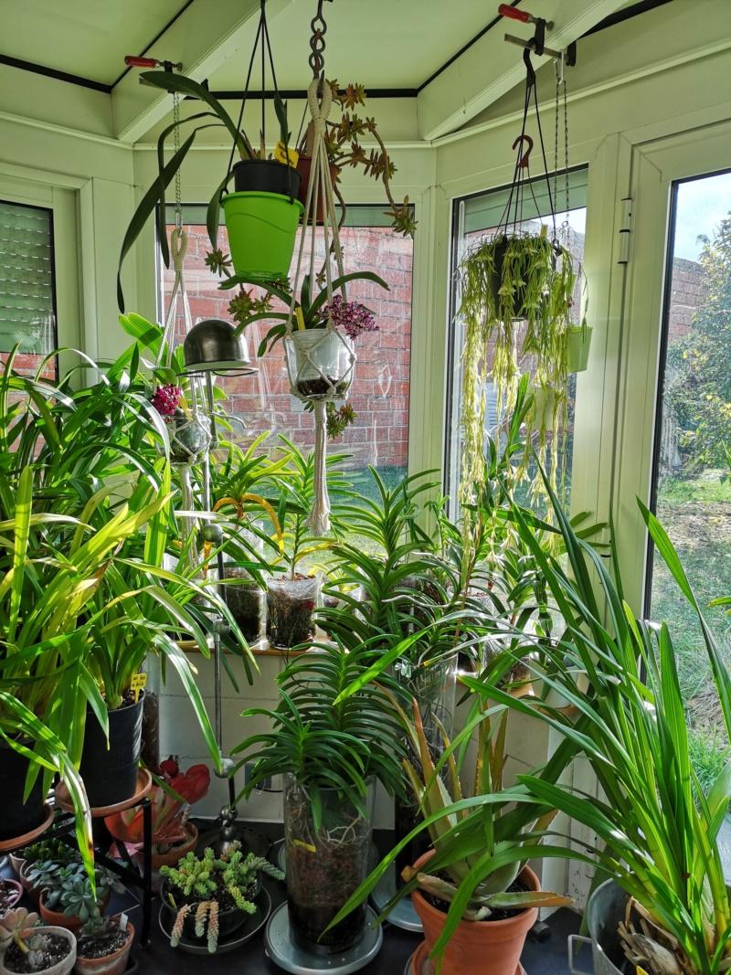 ma véranda, mon petit paradis végétal ... - Page 4 Img_2264