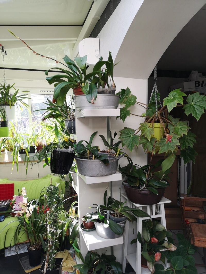 ma véranda, mon petit paradis végétal ... - Page 4 Img_2265