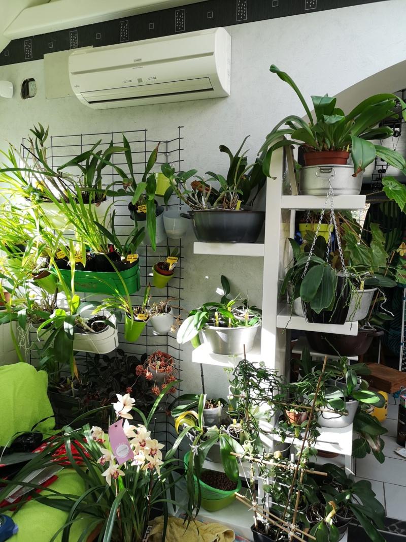 ma véranda, mon petit paradis végétal ... - Page 4 Img_2267
