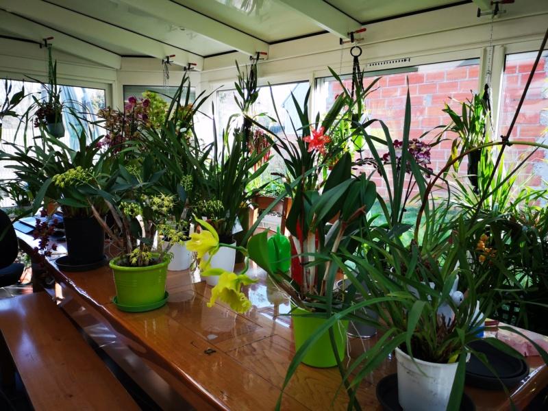 ma véranda, mon petit paradis végétal ... - Page 5 Img_2425