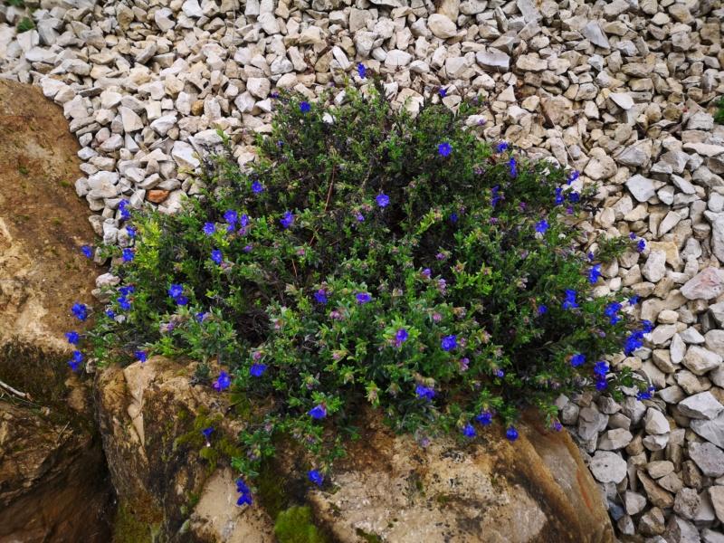 Floraisons du jardin  Img_2559