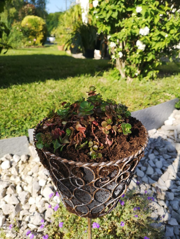 Mes plantations du jour ! Img_2916