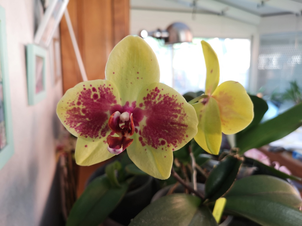 Bouquet de phalaenopsis... Img_2945