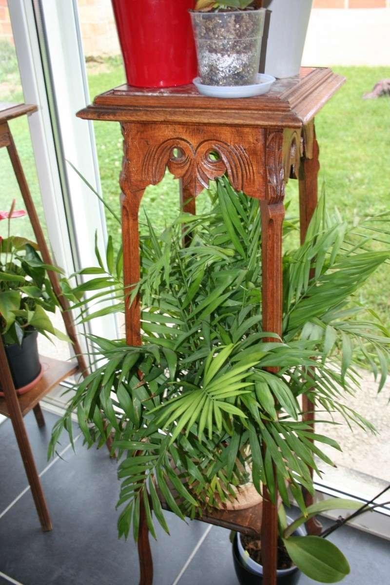 Au sujet des plantes vertes tropicales !!! Img_6410