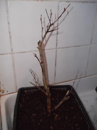 mon premier projet et aussi premier arbre^^ - Page 2 Dscf1326