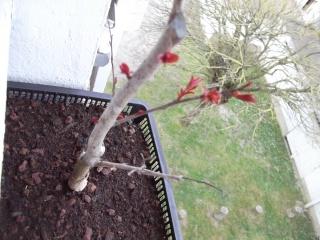 mon premier projet et aussi premier arbre^^ - Page 2 Dscf1330