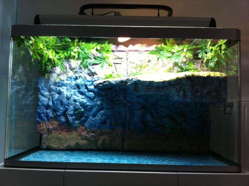 Aquarium de ma TSS Img_0411