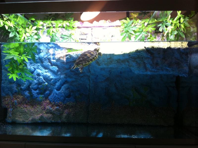 Aquarium de ma TSS Img_0412