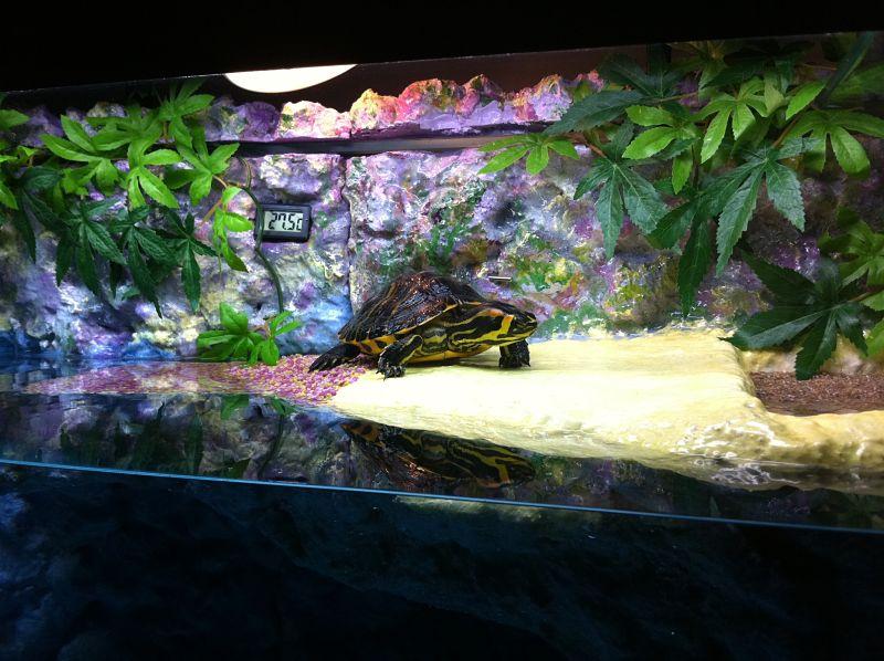 Aquarium de ma TSS Poupet10