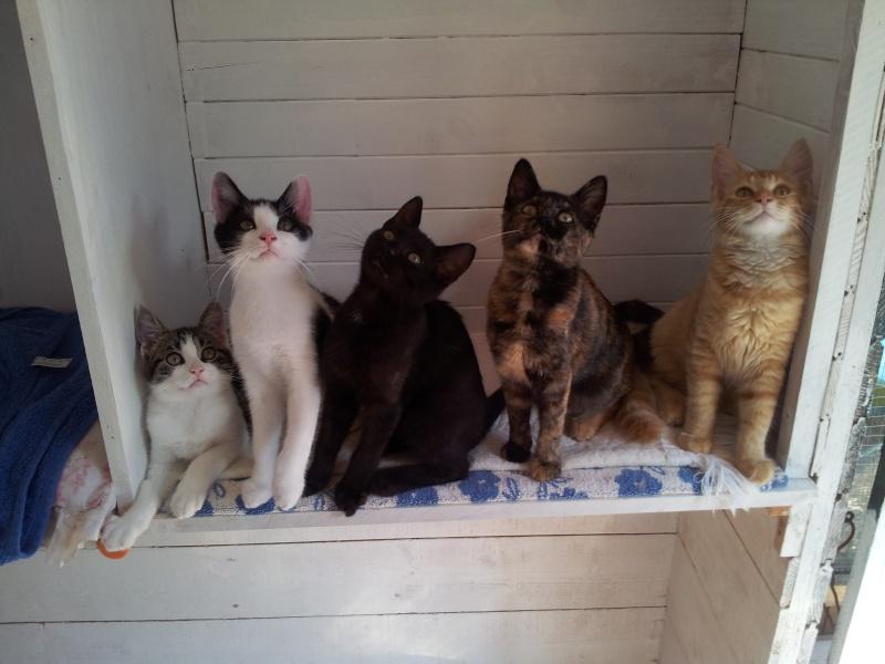 La face cachée de l'Ecole du chat de Quiberon - Page 4 20130910