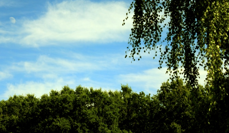 Fin d'après midi - sous les rayons d'aout Img_0910