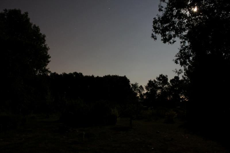 A la lumière de la Lune ..... et de Montauban Jardin10