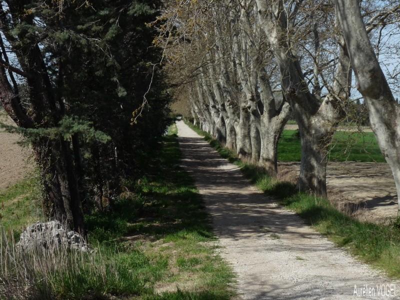 Le printemps, et ces arbres presque tous fleuris P1110334